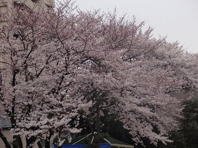 s-雨日曜3月 (3)