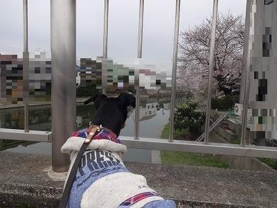 s-雨日曜3月 (10)