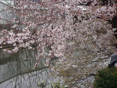s-雨日曜3月 (11)