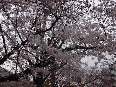 s-雨日曜3月 (13)