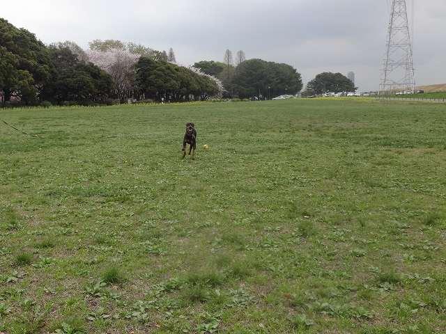 s-桜吹雪 (4)