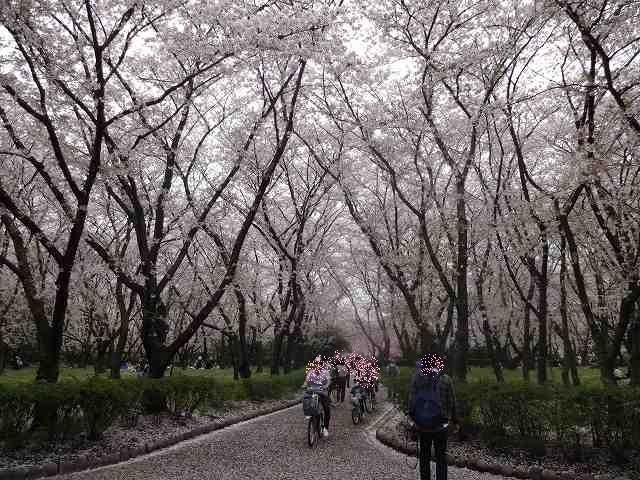 s-桜吹雪 (19)