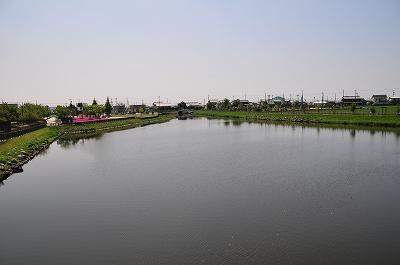 s-柴さくら (15)
