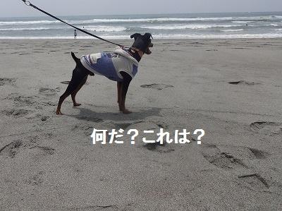 s-中田島 (8)