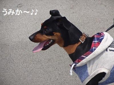 s-中田島 (10)