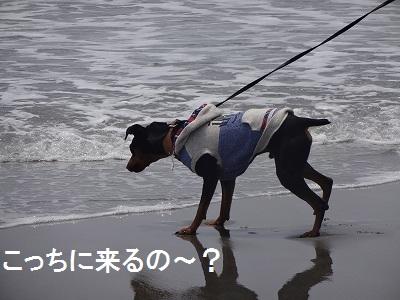 s-中田島 (12)