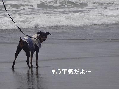 s-中田島 (34)