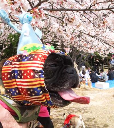 オ-ダ-メイド犬ヅラ自由の女神4