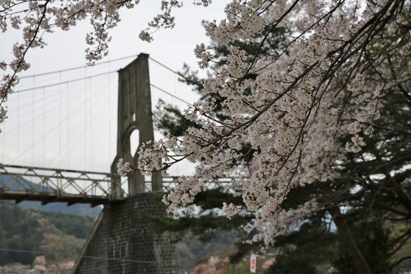 桜が見ごろだった。