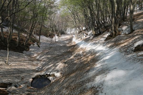 岩木山 沢の下部は春の訪れが。