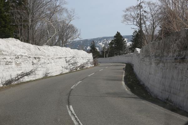 十和田ゴールドライン 雪の回廊