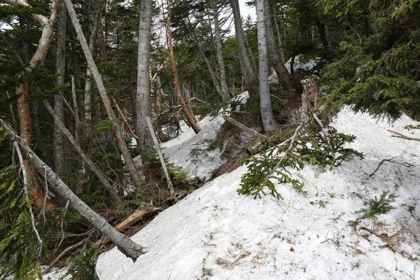 迷い尾根後の稜線部分は残雪が結構あった
