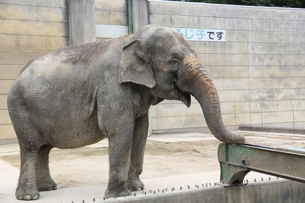 岡崎市東公園 象