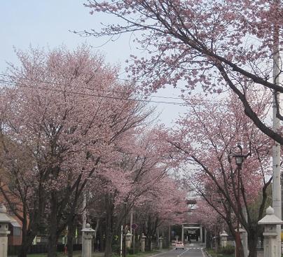 20150429_帯広・桜