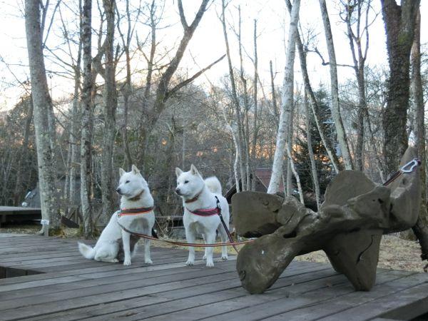 2015.1.3 フェザント山中湖1