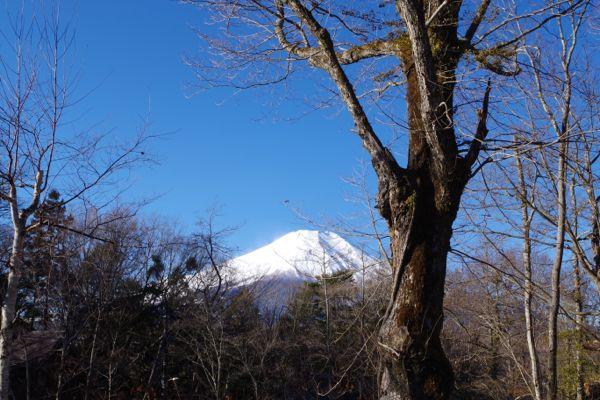 2015.1.3 フェザント山中湖から見えた富士山