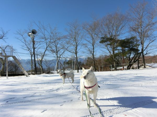 2015.1.12 神社2