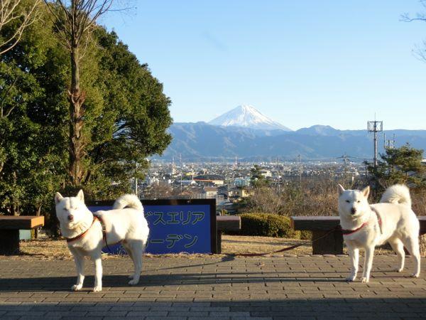 2015.1.12 双葉SAからの富士山