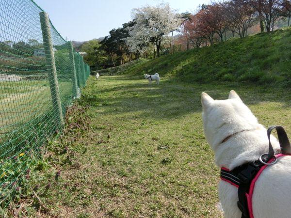 2015.4.26 道の駅・みなかみ水紀行館4