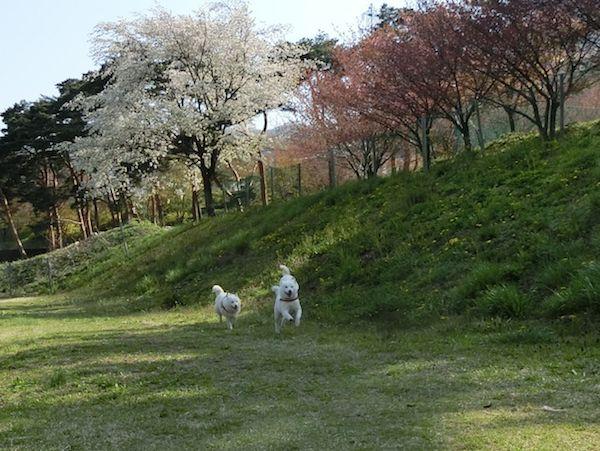 2015.4.26 道の駅・みなかみ水紀行館5