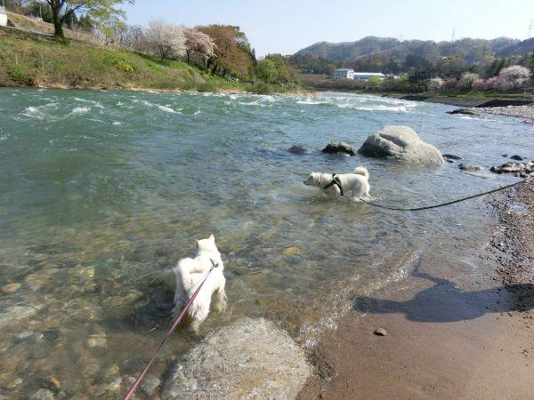 2015.4.26 道の駅・みなかみ水紀行館2