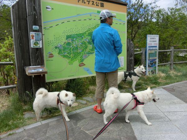 2015.5.4 アルプス公園1