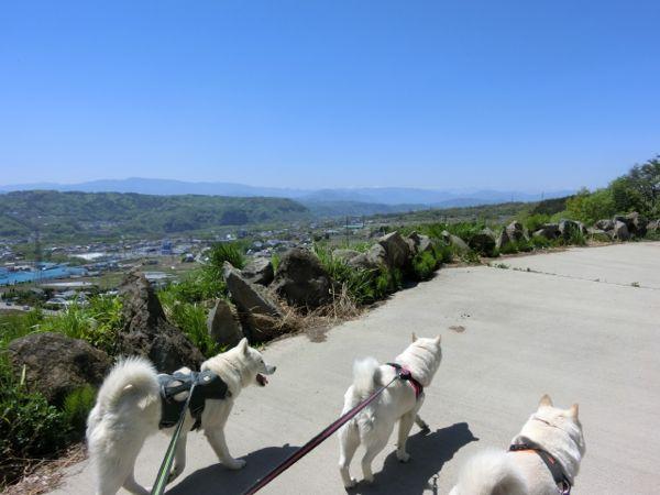 2015.5.5 飯綱山公園3