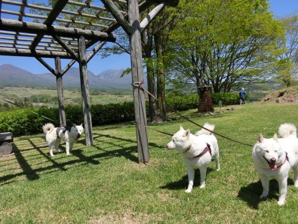 2015.5.5 飯綱山公園11