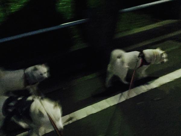2015.6.24 みんなで散歩