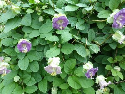 クラウドで観た花①