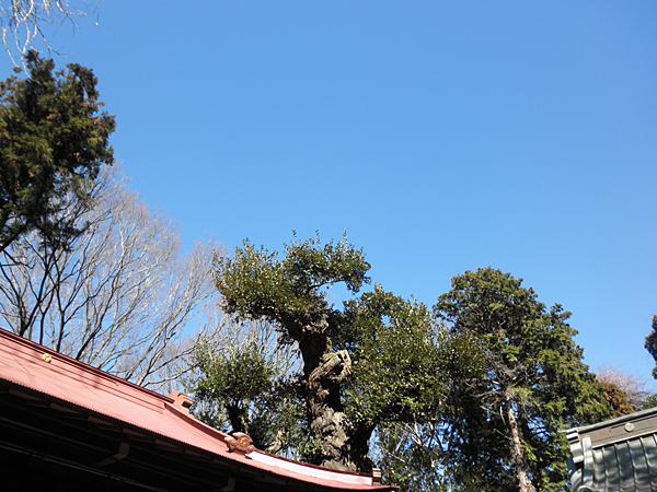 20150118腰掛神社④