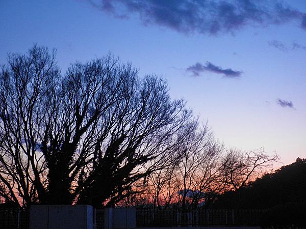 20150215夕焼けと木