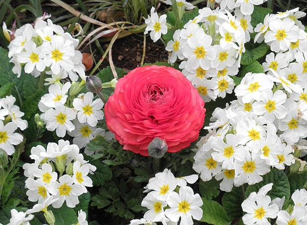 20150401花