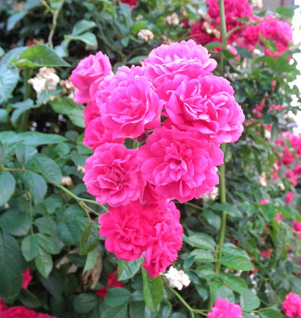20150520花