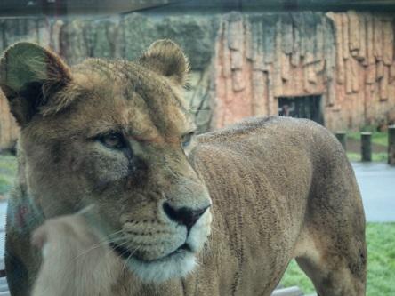 ライオン15-04