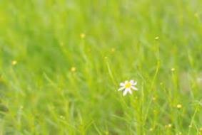 一輪の花10