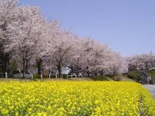 春の季節10