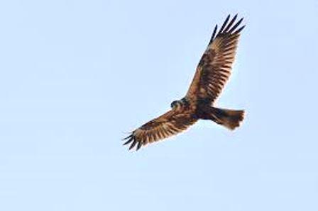 飛ぶ鷹10