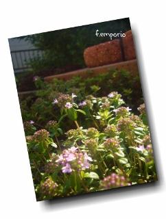 PhototasticCollage-2015-04-29-18-06-20 (242x320)