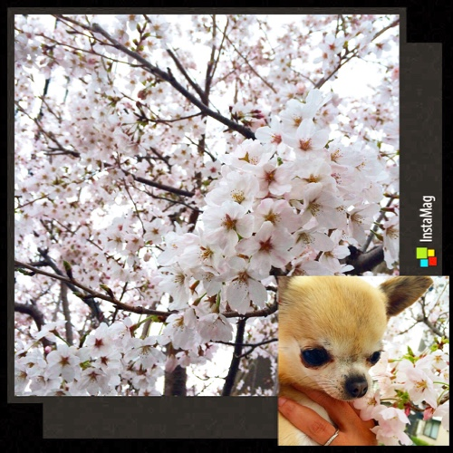 fc2blog_20150419135831b85.jpg