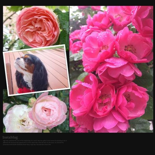 fc2blog_2015051615184761a.jpg