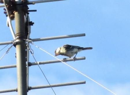野鳥 003