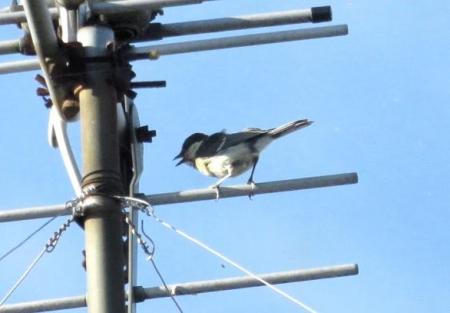 野鳥 002