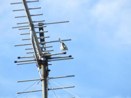 野鳥 001
