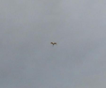 今朝の風景雲 038