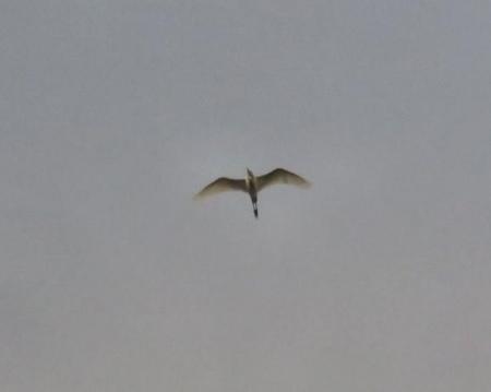 今朝の風景雲 045