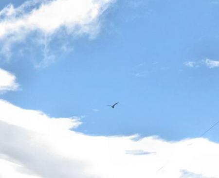 今朝の風景雲 073