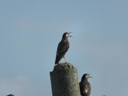 探鳥会人工島 294