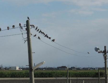 探鳥会人工島 288