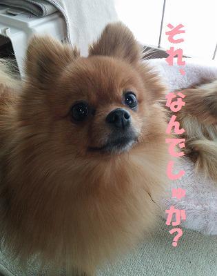 DSC_0043_20150126181445316.jpg